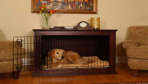 Crate Training a Golden Retriever